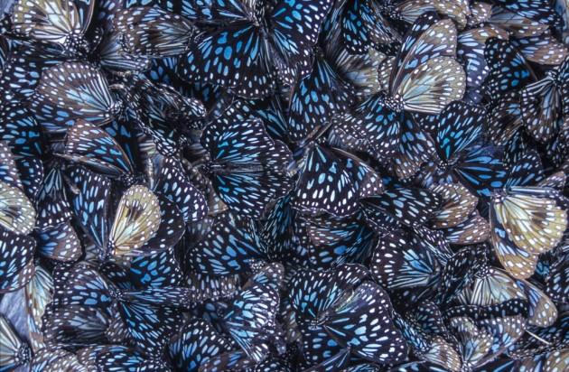 Butterfly effectORI