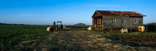 Cane fields to Mt Coolum